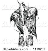 Vintage Black and White Human Anatomy Back with Muscles