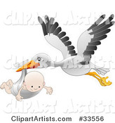 White Stork with Black Tipped Wings, Flying with a Happy Baby in a Cloth