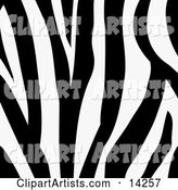 Zebra Animal Print Background with a Black and White Stripes Pattern
