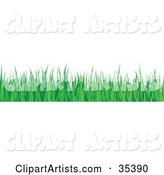 Vector Grass Clipart by KJ Pargeter