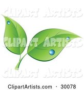 Vector Leaves Clipart by KJ Pargeter