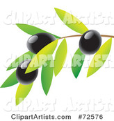 Vector Olive Clipart by Cidepix