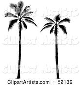 Vector Palm Tree Clipart by Dero