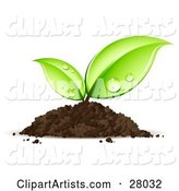 Vector Seedling Clipart by Beboy