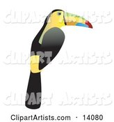 Vector Toucan Clipart by Rasmussen Images