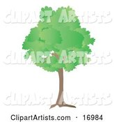Vector Trees Clipart by Rasmussen Images