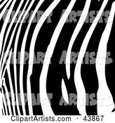 Vector Zebra Clipart by Arena Creative